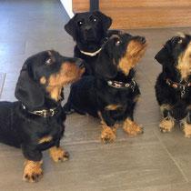 Felix, Maja, Eila und Roxy