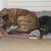 Roxy und Askia