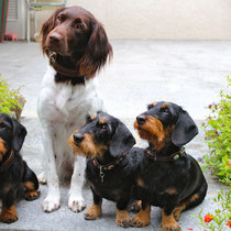 Honey, Ciska, Roxy, Eila