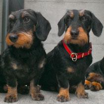 Eila, Lia, Roxy und Felix