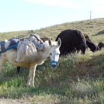 Ich habe mich direkt in den süßen Esel mit seinem hübschen blauen Halfter verliebt.