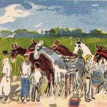 Verzorging van de paarden