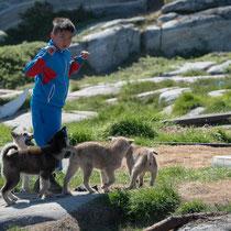 Qeqertarsuaq - junge Schlittenhunde