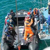 Auf zur ersten Zodiac-Tour - 8 Zodiacs hatte die Delphin an Bord