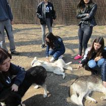 DL 2 und 3 besuchen die Husky - Farm