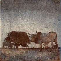 Vache, Debecouroumba, 2011