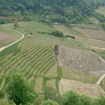 Audit de vignoble et étude d'hydraulique
