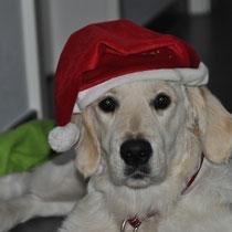 """""""Sam"""" auch ein Weihnachtselfchen!!! Hey Bruder Blue siehst Du das kann ich auch."""