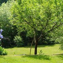 Espaces verts La Rousselie