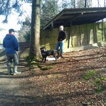 Gruppenunterrichtsstunden für Hunde