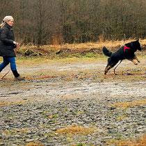 Hundeunterricht Einzeltraining oder Gruppentraining