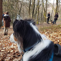 Hundestunde in der Gruppe arbeiten mit Hund