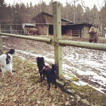 Alltagstraining Gruppenschule Gruppenstunden mit Hunden