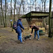Training von Hunden in der Gruppe Gruppenstunden
