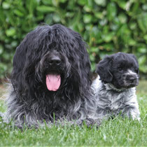 Cooper mit Enkeltochter