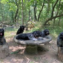 Gemütliche Rast - Cooper inmitten seiner Frauen (auf dem Tisch neben ihm Enya - ringsherum Jane, Camille und Bisou)