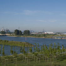 Blick vom  Bahndamm über die Neuanpflanzung in Richtung Südhafen und Rhein, Aufnahme-Datum: 24.06.2009