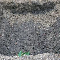 Pflanzgrube für Platane, Aufnahme-Datum: 31.10.2020
