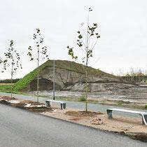Gepflanzte Platanen, Aufnahme-Datum: 31.10.2020