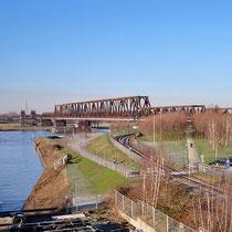 Betula pendula, Sandbirke als Naturverjüngung und Anpflanzung beim Ausbau des Rheinparks, Bereich B, Gelände,  Aufnahme-Datum: 20.01.2019