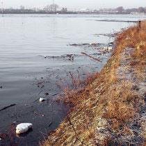 Böschung nördliche Seite des Kultushafen mit Blick auf die überflutete Rheinaue Rheinhausen, Pegelstand Ruhrort 9,99 Meter, Aufnahme-Datum: 10.01.2011