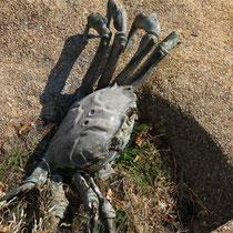 plastic crab