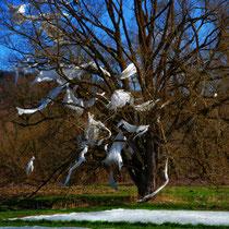 geisterbaum bei tageslicht