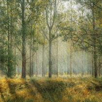 Eifeltour im Herbst – ein pädagoschies Highlight