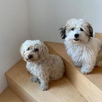 Monty + Lenny von Sabine