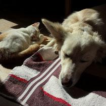 Hund und Katz friedlich schlafend - Foto: pixabay.com