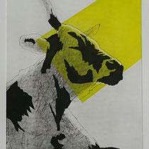 Kuh #1 sw-gelb, 36x28, Farbradierung, 2016