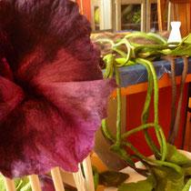 Große Blüte für den Filzrock