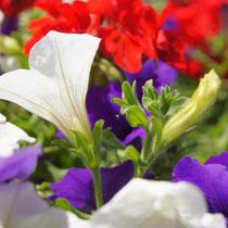 Gemütlichkeit am Balkon mit schönen Blumen