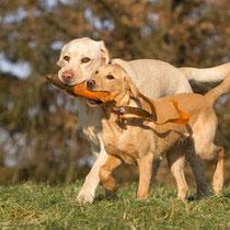 Hundepsychologie / Hundeschule