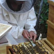 Der Imker beim Entfernen von Bienenwachs