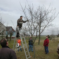 Obstbaumschnittkurs im März