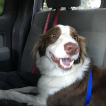 Zoey, ADOPTED!