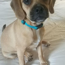 Olive, ADOPTED!