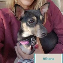 Athena, ADOPTED!