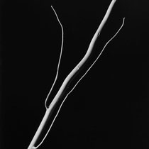 bianconero,fine art,still life,nature morte,fotografia d'arte,foto creative