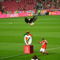 La mascotte du Benfica : un aigle royal.