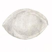 Ohne Titel, 2013, Bleistift auf Papier, 50×70cm
