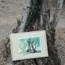 ...olivenbäume in arco