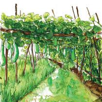 Jardins flottants du lac Inle par les Inthas, aquarelle sur carnet de voyage, réalisé par Natpalette
