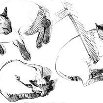 Chat siamois  Crayon sur papier