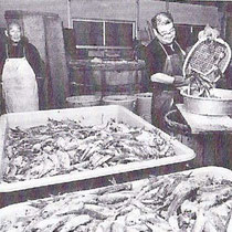 当時の塩漬けの様子 油与商店