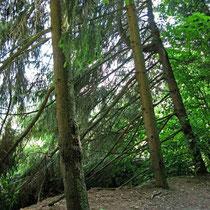 © Traudi – Waldspaziergang auf dem Elisabethenberg