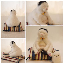 Scottish Fold ♂【Bucho】
