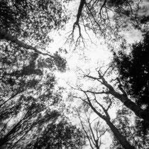 Fill the silence. | Harman Titan 4x5 pinhole camera | Ilford FP4 Plus in Ilfosol 3