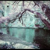 Colors seems so bright. | Fujifilm GA645Wi | Lomochrome XR Purple 100-400